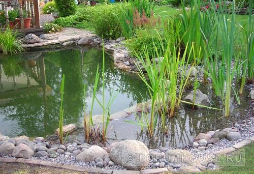 Пруд-купальня: наслаждение для души и тела